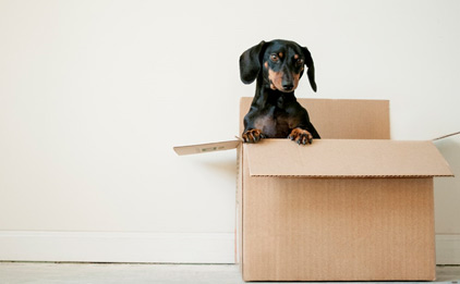 making your house a home - MAKING YOUR HOUSE A HOME- HOMEMAKER®
